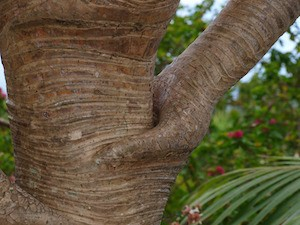 Is your interpretation causing your suffering? Photo of interesting tree trunk